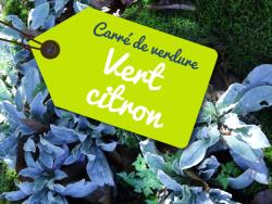 Standplaats - Camping pitch : Vert citron - Parenthèses imaginaires