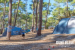 Establishment Camping La Dune Bleue - Carcans
