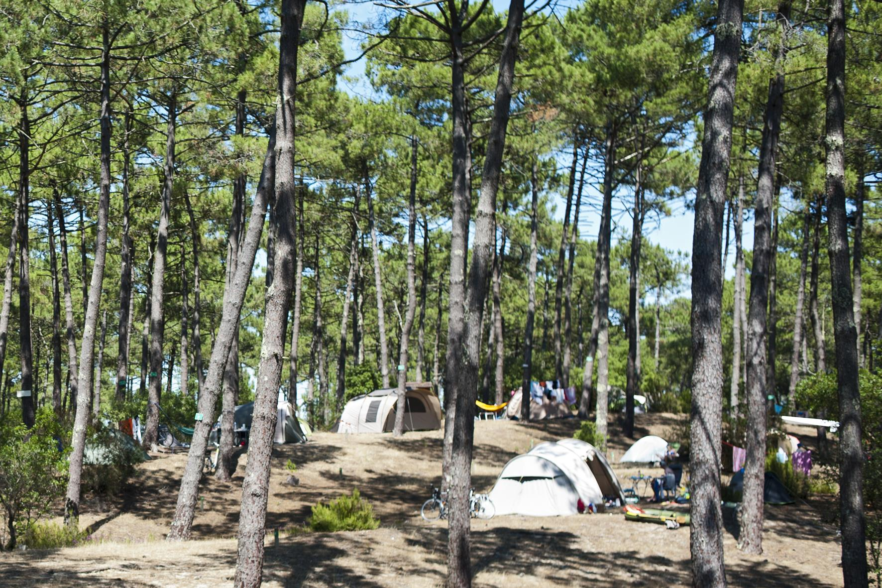 Emplacement - Emplacement Camping Confort + - Huttopia Landes Sud