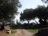 Pitch - Pitch (Teepee) - Villaggio Camping COSTA DEL MITO