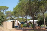 Pitch - Pitch - car - tent or caravan - Camping Les Cigales
