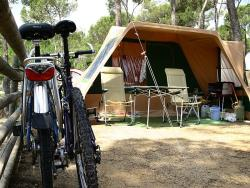 Pitch M  (vehicule + tent + electricity 6 amp)