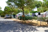Pitch - Nature Package (1 tent, caravan or motorhome / 1 car) - Camping Côté Plage