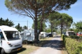 Pitch - Pitch 2 pax with electricity and one car - Camping Les Romarins