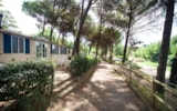 Rental - Mobilhome Classic - Toscana Holiday Village