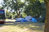Pitch - Pitch with electricity - Camping du Pont d'Avignon