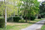 Pitch - Confort Package : Pitch + car + tent/caravan or camping-car + electricity 10A - Camping DOMAINE DE GIL