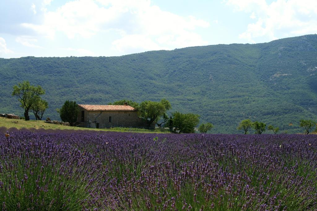 Domaine Chasteuil-Provence