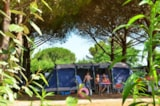 Pitch - PITCH WITH ELECTRICITY 6 AMPERES - AIROTEL CAMPING BON PORT