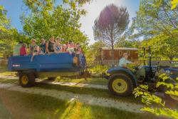 Animations Camping Du Domaine D'anglas - Brissac