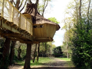 Tree House - 2 Bedrooms + 0 Bathroom - Insolite