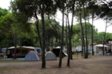 Pitch - Pitch Type  B - Camping Village Cavallino