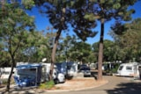 Pitch - Pitch (car + tent or caravan + electricity) - Camping Cabopino