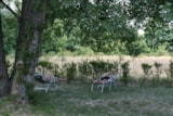 Pitch - Large Pitch: >1300ft², electricity (10A)  Carfree area - Camping Les Rives du Lac