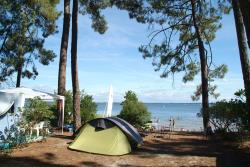 Establishment Camping Le Tedey - Lacanau