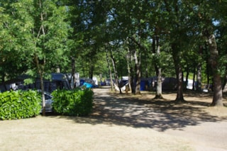 Package:  Pitch Forest (N°9 À 40) 80 Till 120M2 + Electricity