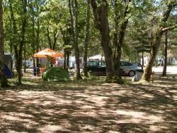 Establishment CAMPING LA FORET - Pezuls