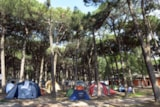 Pitch - Pitch - Tent - Caravan - Camping Car with Car or moto - Camping Mare e Pineta