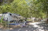 Pitch - Silver Pitch: tent , caravan or camper, 3A electricity - Camping Village Baia Azzurra