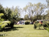Pitch - Pitch per night with electricity - Camping  Etangs de Plessac