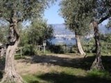 Pitch - Pitch Caravan/Trailer Tent /Tent > 5 mt - Villaggio Santa Fortunata
