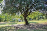 Pitch - Tent Pitch XXL 150m²  (without electricity) - Camping L'Ombrage