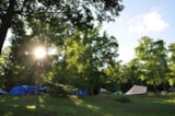 Pitch - Natural Pitch - Camping Sites et Paysages AU BOIS JOLI