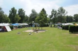 Pitch - Comfort pitch (Electricity 6 amp, water and drainage point, TV) - Veluwecamping 't Schinkel