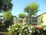 Rental - Canvas bungalow 20m² 2 bedrooms (without private facilities) - Camping LES CALQUIERES