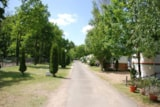 Pitch - Pitch with car + tent, caravan or camping-car + electricity 10 A + 2 adults - Camping Les Acacias