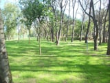 Pitch - Pitch Confort (70-75m²): car + tent/caravan or camping-car + electricity 10A - Camping Playa Brava