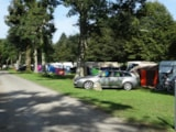 Pitch - Pitch + electricity 10A - Camping A l'Ombre des Tilleuls