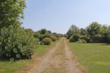 Pitch - Nature pitch XL and over + 2 persons (car + caravan or tent) - Camping Des Hautes Grées